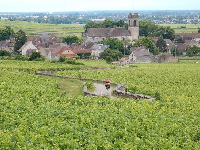 fietsen door wijngaarden